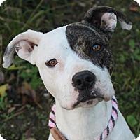 Adopt A Pet :: BRANDY - Red Bluff, CA