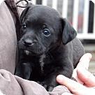 Adopt A Pet :: Noah (3 lb) Video!