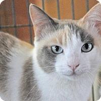Adopt A Pet :: OCTOPUSS - Fernandina Beach, FL
