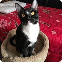 Adopt A Pet :: Vanity - Yorba Linda, CA