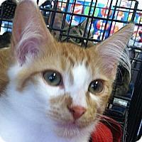 Adopt A Pet :: Flash - Winchester, CA