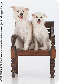 Terrier (Unknown Type, Medium) Mix Dog for adoption in Bedford, Texas - Owen