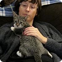 Adopt A Pet :: Paydirt - Brooklyn, NY