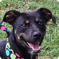 Adopt A Pet :: Jackie - Buffalo, WY