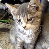 Adopt A Pet :: Amanda - Island Park, NY