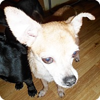 Adopt A Pet :: Rex - Umatilla, FL