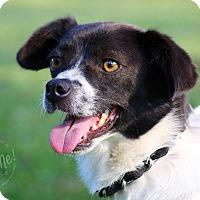 Adopt A Pet :: Maggie - Wilmington, DE