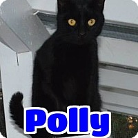 Adopt A Pet :: #57-3676 Polly - fostered /sponsored GB - Lawrenceburg, KY