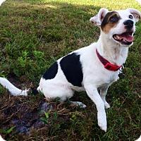 Adopt A Pet :: GEORGIA - Terra Ceia, FL