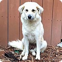 Adopt A Pet :: Lady - Atlanta, GA