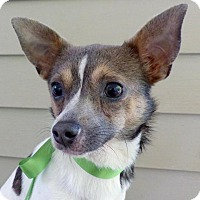 Adopt A Pet :: Chimichanga - Baton Rouge, LA