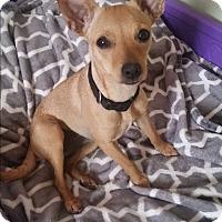 Adopt A Pet :: Abby - Lodi, CA