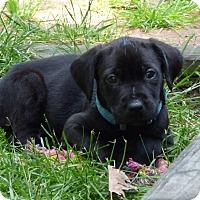 Adopt A Pet :: George - Barnegat, NJ