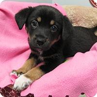 Adopt A Pet :: Alexandra - Groton, MA