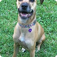 Adopt A Pet :: Daisy - Royal Palm Beach, FL