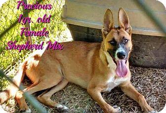 Shepherd (Unknown Type) Mix Dog for adoption in DeForest, Wisconsin - Precious