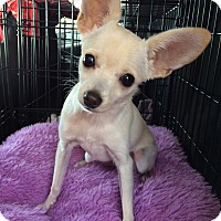 Adopt A Pet :: Spike 4 lbs. - Los Angeles, CA