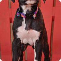 Adopt A Pet :: Salem - Hagerstown, MD