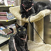 Adopt A Pet :: Bindi & Bree - Las Vegas, NV