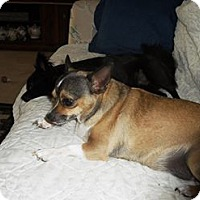 Adopt A Pet :: Puppy - Englewood, FL