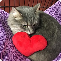 Adopt A Pet :: Ophelia - Richmond, VA