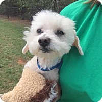 Adopt A Pet :: Andy - Lindale, TX