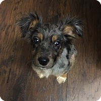 Adopt A Pet :: Sookie - Marietta, GA