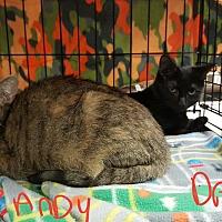 Adopt A Pet :: Brady and Dancy - Gainesville, VA