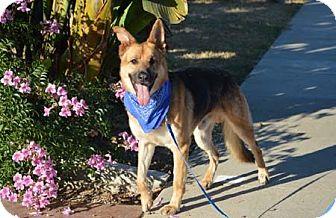 German Shepherd Dog Dog for adoption in Mira Loma, California - Houston
