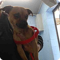 Adopt A Pet :: URGENT ON 3/1  San Bernardino - San Bernardino, CA