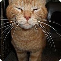 Adopt A Pet :: Big Red - Acme, PA