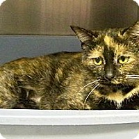 Adopt A Pet :: Halle - Dover, OH