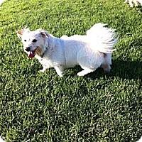 Adopt A Pet :: Daisy - Goleta, CA