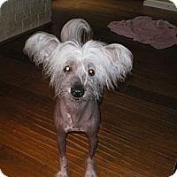 Adopt A Pet :: Dillard - Apex, NC