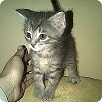Adopt A Pet :: Rocky - Island Park, NY