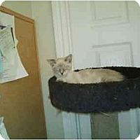 Adopt A Pet :: Iris - San Ramon, CA