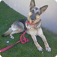 Adopt A Pet :: Milan (courtesy post) - Scottsdale, AZ