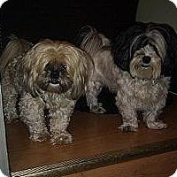 Adopt A Pet :: Jake and Peanut - Hamilton, ON
