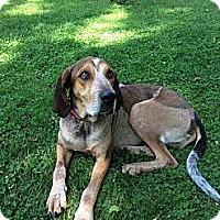 Adopt A Pet :: Hank - Toledo, OH