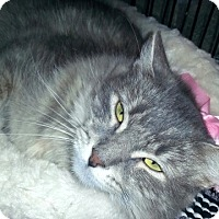 Adopt A Pet :: Tiffany - Gilbert, AZ