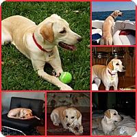 Adopt A Pet :: GINGER - Davenport, FL