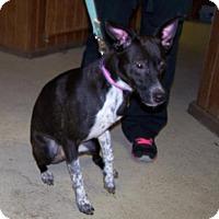 Adopt A Pet :: Kiera - Paris, IL
