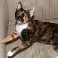 Adopt A Pet :: Guenevere - Sarasota, FL