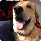 Adopt A Pet :: Jase