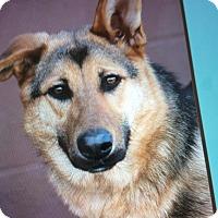 Adopt A Pet :: LADY VON LIESL - Los Angeles, CA