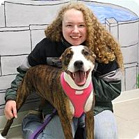 Adopt A Pet :: Becca - Elyria, OH