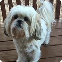 Adopt A Pet :: Tootsie - Atlanta, GA