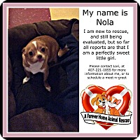 Adopt A Pet :: Nola - Clermont, FL