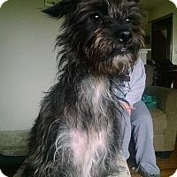 Adopt A Pet :: Riley - Joliet, IL