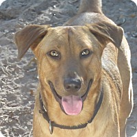 Adopt A Pet :: Sonny!  Fascinating - St Petersburg, FL